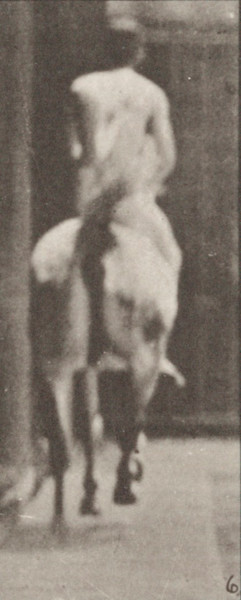 Horse Smith cantering, saddled with nude rider