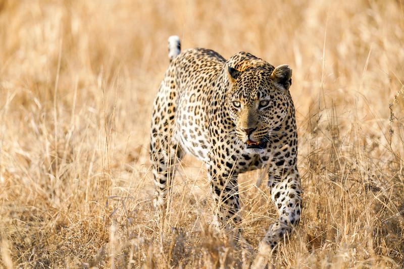LeopardHills-20181001-3352.jpg