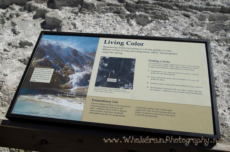 20100713_Yellowstone_2822_1.jpg