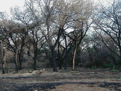 Bosque Fire Damage