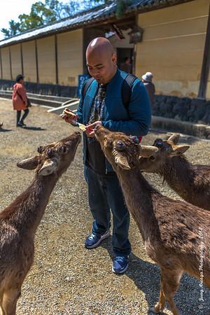 2014 Japan Day 4: Nara