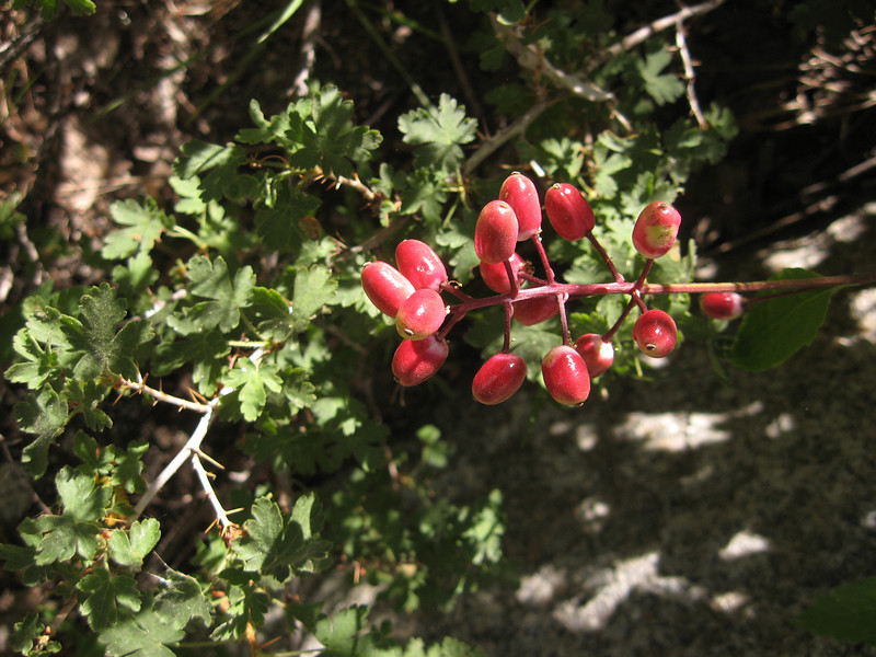 small berries