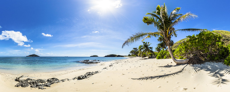 The Palm Tree at Paradise Beach - Yasawa - Fiji Islands