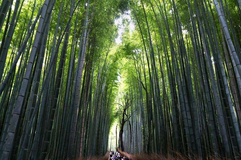 Bamboo Forest, Arashiyama Park