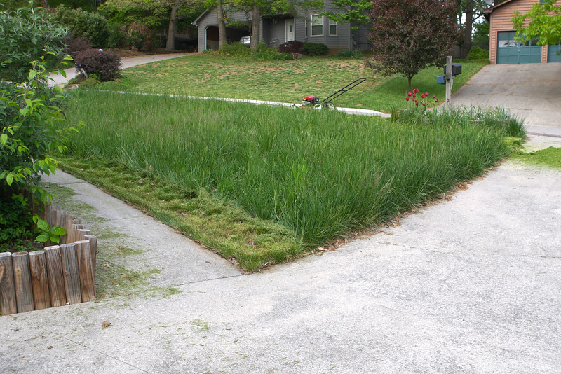 After sitting still for eight months, the lawn suddenly burst into life, and I found myself rushing out for a lawnmower