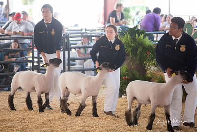 OC FAIR  SHEEP SHOWMANSHIP
