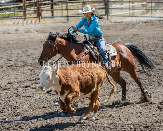 Reined Cow Horse  Fri-Sun  BCHSRA Finals