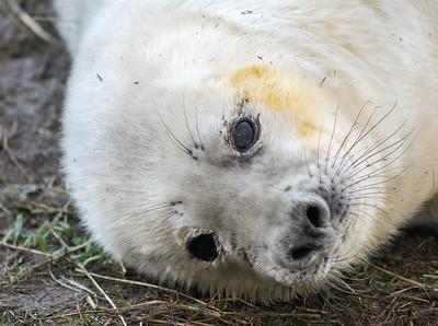 DONNA NOOK GREY SEALS (3)