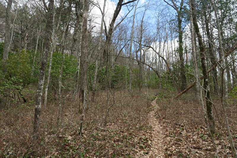 Laurel Knob Trail - 3,900'