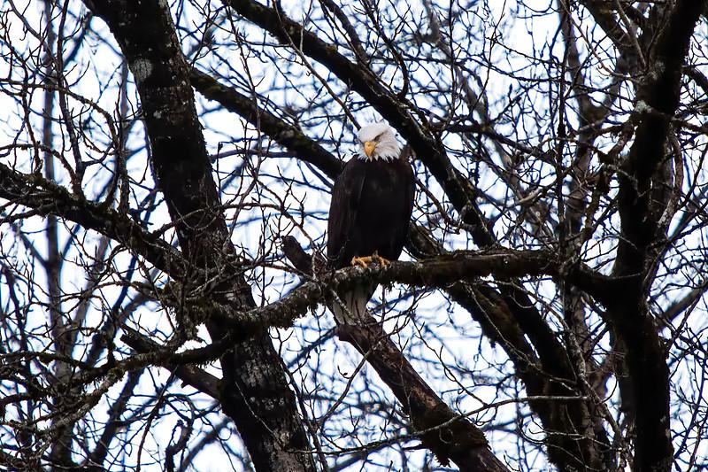 Eagles Washington-02.jpg