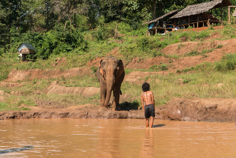 elephant-sanctuary-chiang-mai-10.jpg