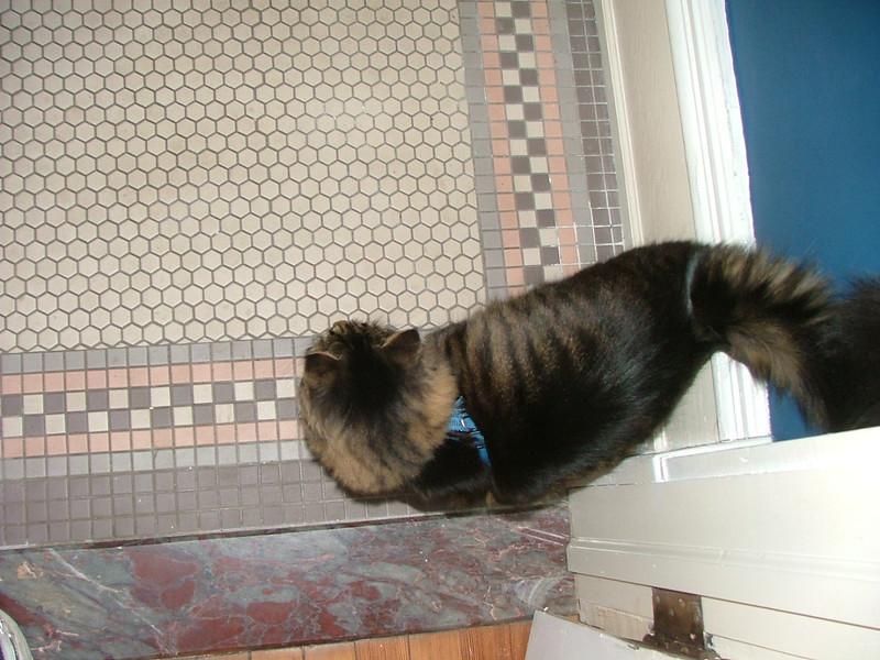 1848 kitty cat
