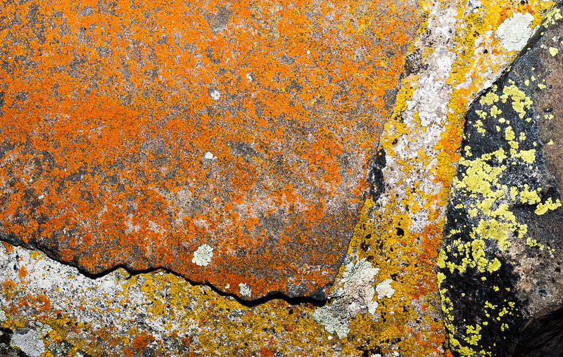 Lichen 1, Dry Falls Visitor Center, Washington, 2000
