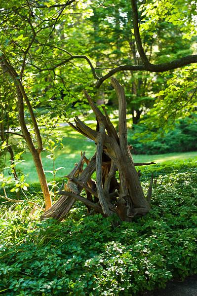20130824 DOW Garden-3611.jpg