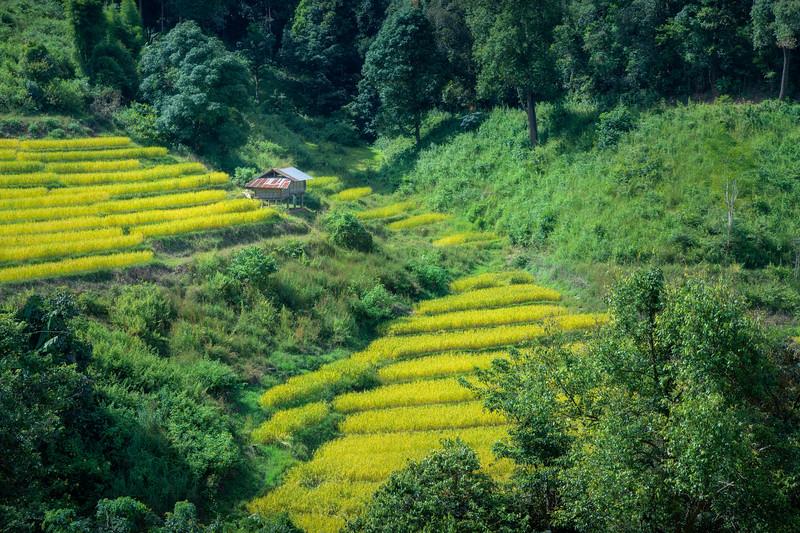 Paddy Production || Mae Klang Luang