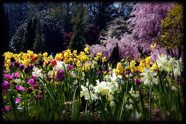 Theme: Flowers
