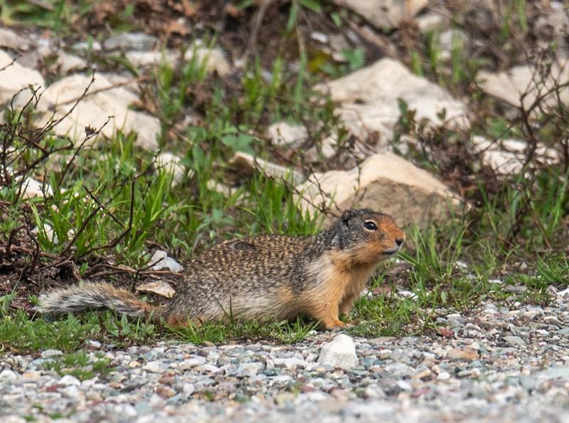 Smaller Mammals