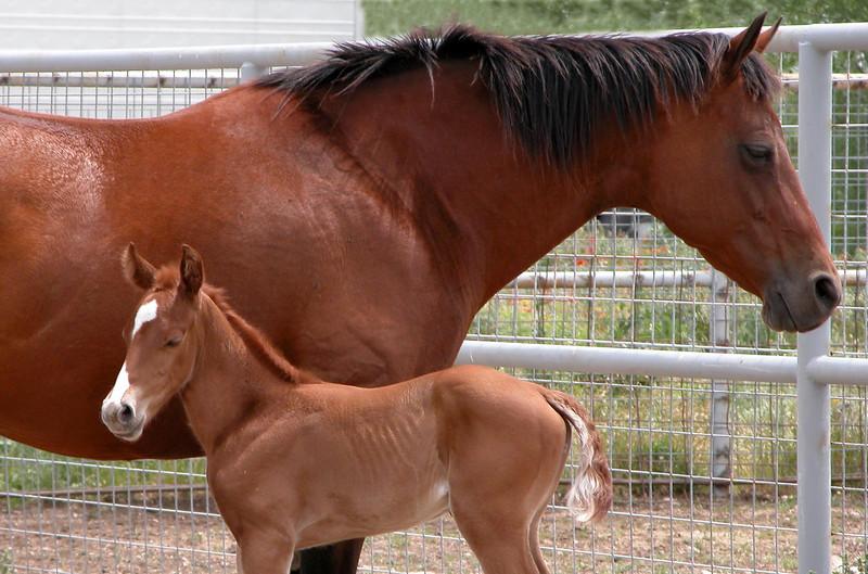wht face foal.jpg