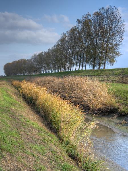 Poplars - Zena Canal, Crevalcore, Bologna, Italy - November 14, 2012