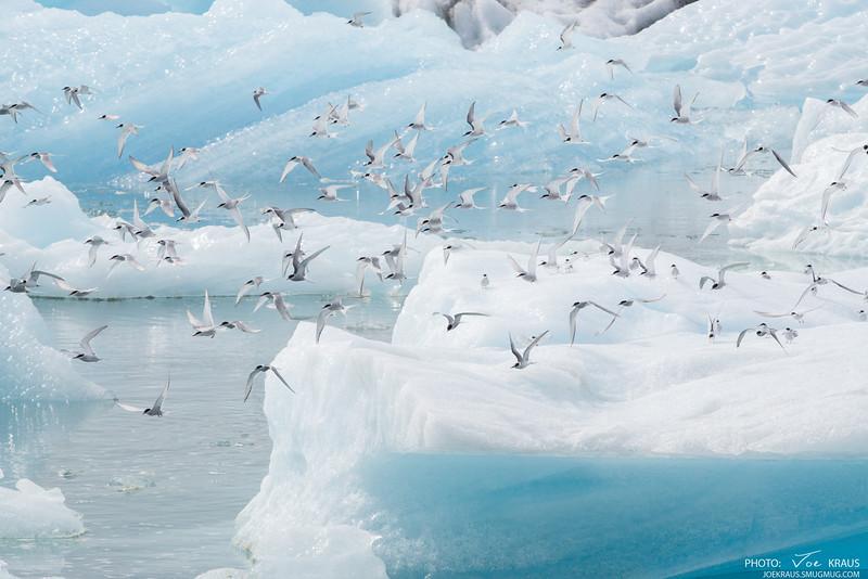 Flying in Ice! II