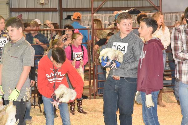 Gillespie County Livestock Show judging