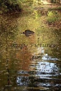 Lanana Creek019