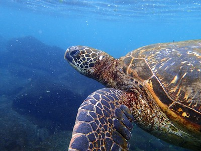 Galapagos Day 12 - Floreana Island