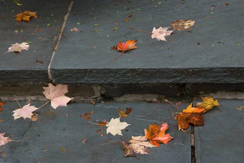 leaves-on-steps.jpg