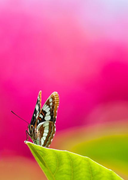 Butterfly_20130601_031.jpg
