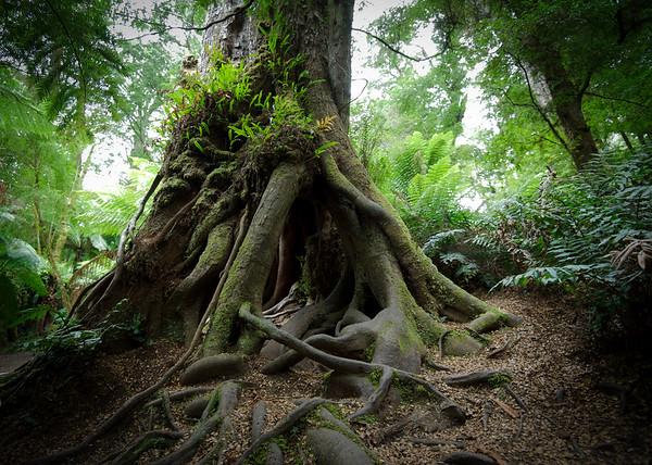 Mait's Rest Forest Walk