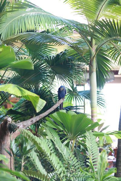 Kauai_D5_AM 226.jpg