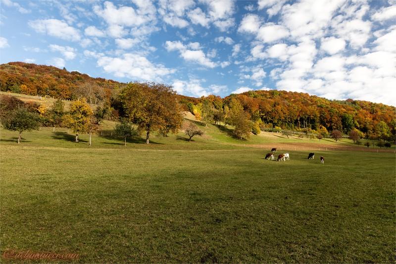 2016-10-22 Herbststimmung Aargau 0U5A1326.jpg