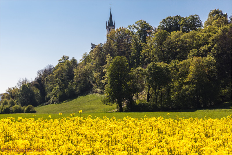 2017-04-24 Rein Frühling - 0U5A5394-Bearbeitet.jpg