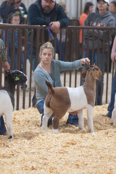 kay_county_showdown_goats_20191207-157.jpg
