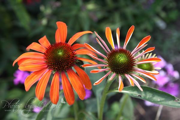 Perennial Bouquet