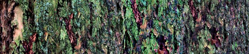 Bark 108 @72 resized.jpg