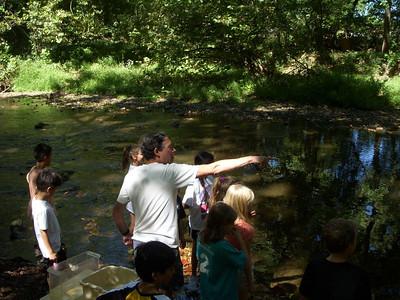 Creek Walk and Exploration