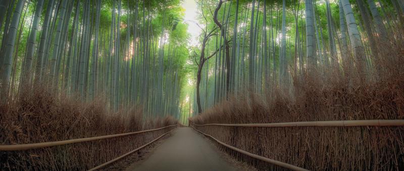 Arishiyama Bamboo