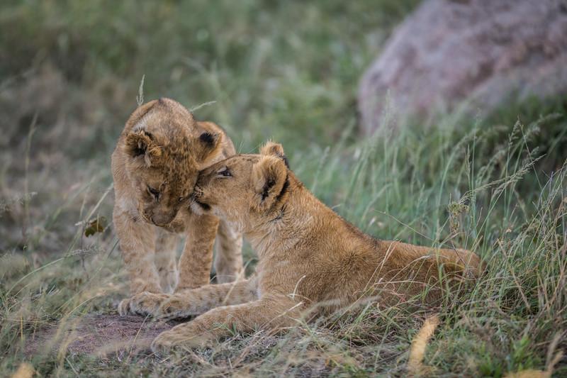 Tanzania_Feb_2018-554.jpg
