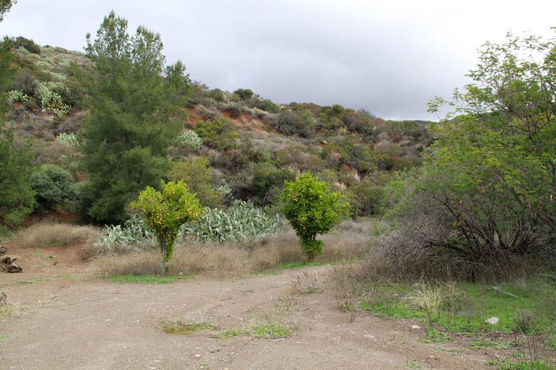 32633-Trabuco-Canyon-Rd-Mitchell-East-Trabuco-Canyon_76.JPG