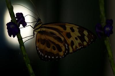Sertoma Butterfly House II