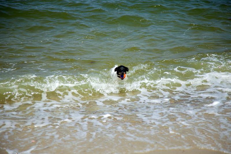 Cape Cod 2011 73.jpg