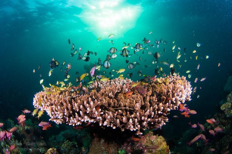 corner table coral (1 of 1).jpg