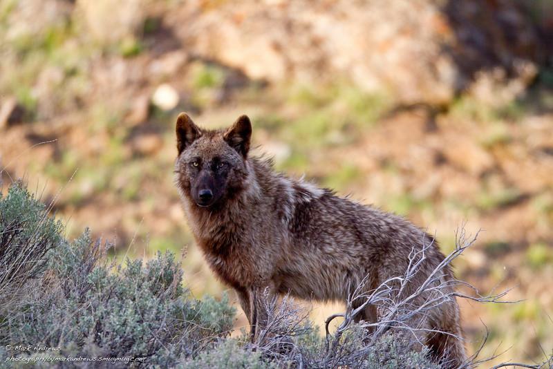 Yellowstone Spring 2012