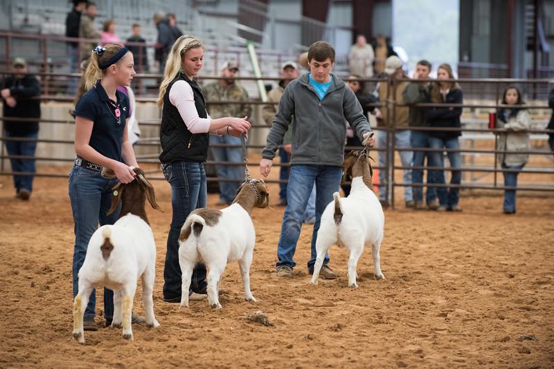 Hays_County_Show-0054.jpg