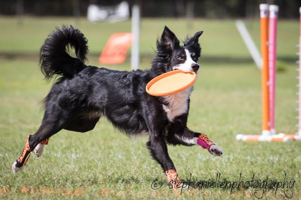 _MG_3161Up_dog_International_2016_StephaniellenPhotography.jpg