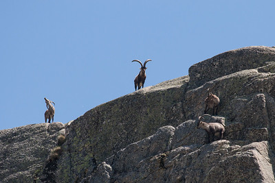 Dyr og Krybdyr fra Extremadura