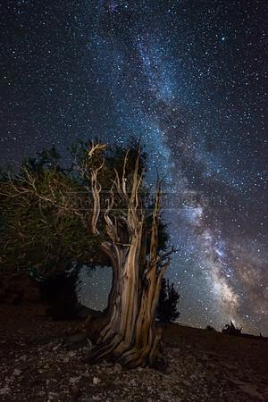 Sierra Nevadas & Yosemite