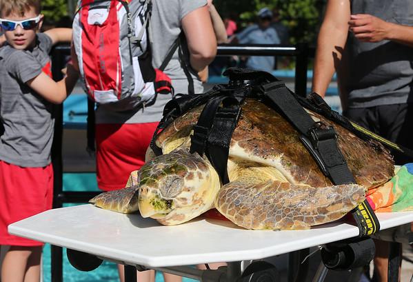 2019 Loggerhead TurtleFest