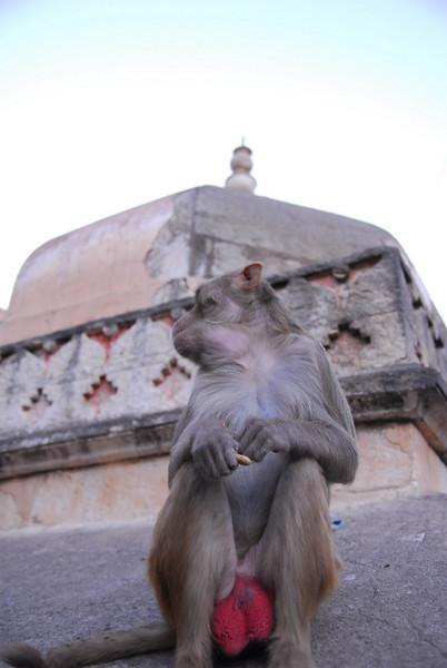 MonkeyTemple-39.jpg